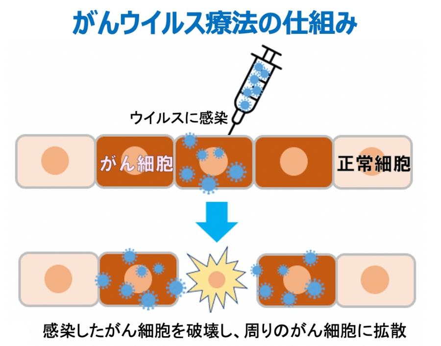 がんウイルス療法の仕組みを表した図